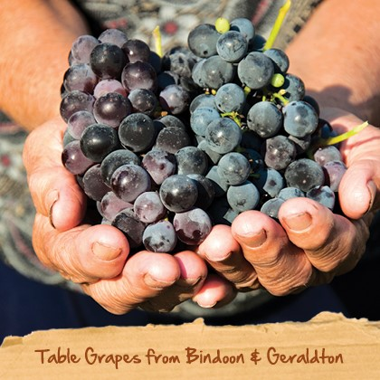 about spudshed - table grapes from bindoon geraldton